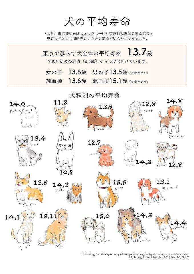 犬の寿命 現在どのくらい 尾形聡子 犬曰く